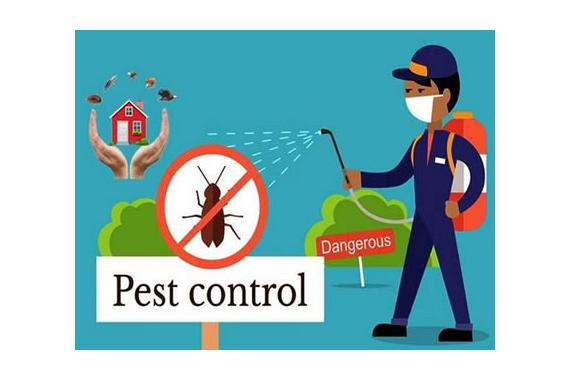 SEO for Pest Control and exterminators